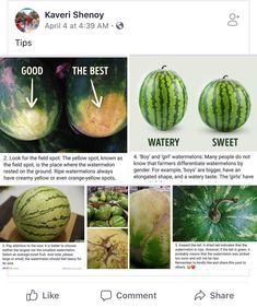 Yellow Spots On Indoor Plants . Yellow Spots On Indoor Plants . 6 Mon Causes for Yellowing Leaves On Houseplants Watermelon Tumblr, Types Of Watermelon, Cat Plants, Yellow Leaves, Orange Yellow, Differentiation, Picture Design, Houseplants, The Locals