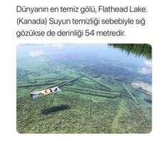 Place to visit! Flathead Lake Montana, Weird Facts, Fun Facts, Good Sentences, Interesting Information, Water Me, Crystal Clear Water, The More You Know, Canada