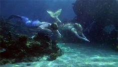 From mako mermaids one of the best shows I've ever seen Mermaid Gifs, Mermaid Man, Mermaid Cove, H2o Mermaids, Fantasy Mermaids, Mermaids And Mermen, Mythical Creatures, Sea Creatures, Silicone Mermaid Tails