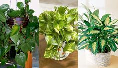 Gardening, Google, Plants, Great Ideas, Garden, Garten, Flora, Plant, Lawn And Garden
