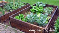 Front yard raised veggie beds in a little city garden