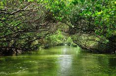 Cigu Lagoon, Taiwan | Taijiang National Park