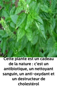 Physique, Detox, Cancer, Herbs, Canning, Life, Nutrition, Food, Garden