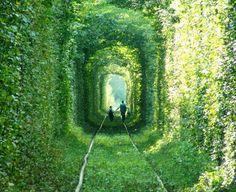 grøn tunnel - fra Haverummet /blog