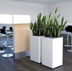 Afbeeldingsresultaat voor planten op kantoor