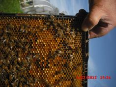 The ladies have really been packing in the pollen with the recent warm weather.