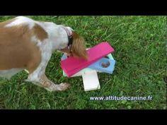 Jeux éducatifs pour chiens (chat, furet...) - chacun son caractère... - YouTube Diy Pour Chien, Border Collie, Dogs, Jessie, Phoenix, Rugs, Dog Activities, Dog Body Language, Border Collies