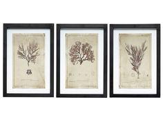 Botanische prints zijn helemaal hot! Met dit prachtige set van Hübsch zet je direct de trend voort! De fotolijsten zijn gemaakt van hout en voorzien van een bo