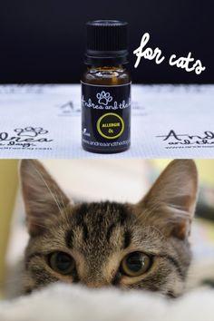 Deine Katze reagiert allergisch? Auf das Futter, die Umgebung, die Welt?   Das Allergie Öl von Andrea and the dog schützt deinen Liebling vor sämtlichen Umwelt- und Nahrungsallergenen… Einfach Flasche gut schütteln, 1x täglich 2-3 Tropfen auf deinen Handinnflächen verteilen und deinem Liebling eine Rückenmassage verpassen…  #katzenliebe #allergie #allergikerkatze #naturpur #naturproduktefürkatzen #Umweltallergie #futtermittelallergie Drink Bottles, Cats, Environment, Flasks, Simple, Gatos, Cat, Kitty, Kitty Cats