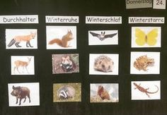 """Small lesson on """"Animals in Winter"""". After we clarified … – Winter Craftsy Bloğ Kindergarten Portfolio, Kindergarten Classroom, Primary School, Elementary Schools, Art Education Lessons, Thing 1, Science Student, Science Activities, Science And Nature"""