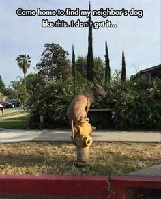 funny-dog-and-fire-hyderant funny animal pictures pictures funny Animals
