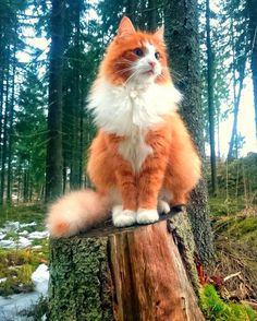 Majestic Forest Cat cats funny pictures