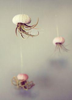 Five Jellyfish Air Plants // Sea Urchins Hanging Art door PetitBeast