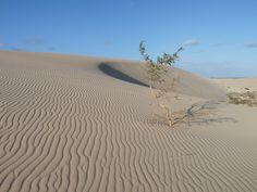 Dunes Corralejo - Page perso / Blog Famille Joannes - L'île & ses oiseaux