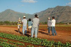 Food Safety Coaching: Walk through with CTAHR Food Safety program