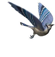 moving bird gif - Bing images