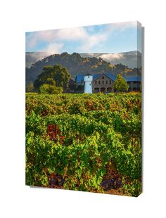 Wine Country Print, Napa Valley Winery Photo, California Decor, Silver Oak Fine Art, Canvas Gallery Wrap, Green Wall Art, Saint Helena Decor by SusanTaylorPhoto on Etsy