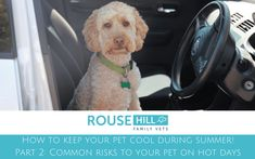 Find out about the most common risks to your pets on hot days!