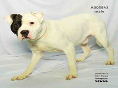 09/04/16-ROSENBERG, TX - CRITICAL!!! HAS UNTIL WED. 09/07/16!!! This DOG…
