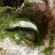 How to Make Moss