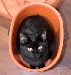black cat in a bucket