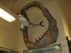 Mandíbulas Megalodon en comparación con el mayor tiburón blanco. Ellos viven, y los informes, extinto hace 1 millón de años. Estas criaturas han sobrevivido. Uno de ellos fue etiquetada y se dice que vive más abajo de 6600 pies bajo el mar. Son aprox. 60-100 pies de largo!