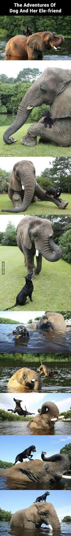 The cutest and most unlikely animal friendship you'll see.