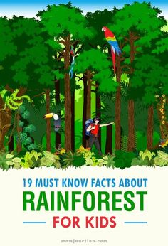 Must Know Rainforest Facts For Kids 19 Must Know Facts About Rain forest For Kids: Read our post and get the answers to these questions and Rainforest Facts For Kids, Rainforest Preschool, Rainforest Classroom, Rainforest Crafts, Rainforest Project, Preschool Jungle, Rainforest Habitat, Rainforest Theme, Rainforest Animals