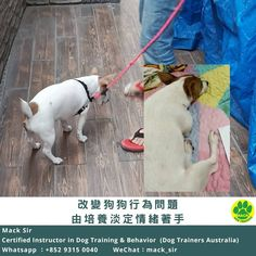 Dog Training Techniques step-by-step dog training guide will get you started. Dog Obedience Training Dog Training Commands Dogs Training Tips Dog Training School, Best Dog Training, Marley And Me, Dog Training Techniques, Crazy Dog, Best Relationship, Dog Life, Best Dogs, Puppies