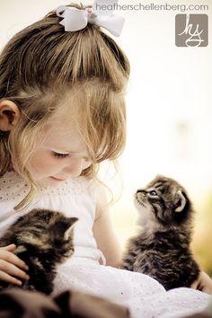 Kitten Curiosity by Heather Schellenberg