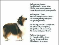 Pure Collie Luv <3