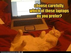 cats  computers