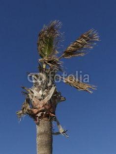 Palme vor blauem Himmel am Strand von Alacati bei Cesme in der Provinz Izmir in der Türkei
