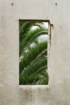 snowy window through to green tropical plants Harry Potter Poster, Palm Trees, Plant Leaves, Tree Leaves, Art Photography, Framing Photography, Painting, Decoration, Wallpapers