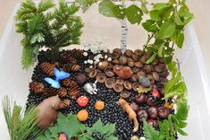 I couldn't wait to do a sensory bin with a temperate forest. We looked for ingredients together with my daughter and brought home a few lea...