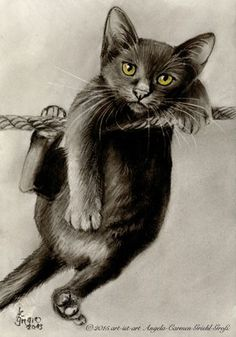 Hang in there cat illustration I Love Cats, Crazy Cats, Cool Cats, Cat Paws, Dog Cat, Black Cat Art, Black Cats, Image Chat, Cat Drawing