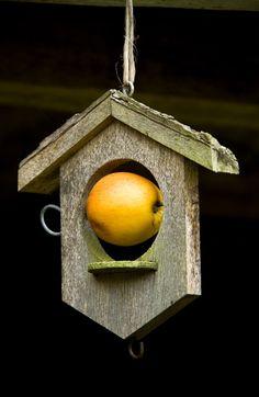 01_bird_feeder_Allt-y-bela_Britt_Willoughby_Dyer
