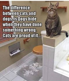 Dogs hide when they've done something wrong,Cats are proud of it.