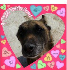 Pet me. #Valentine #Dog
