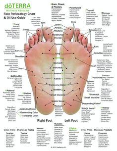 Hand & Foot reflexology chart indicating possible essential oil uses for the var. - Hand & Foot reflexology chart indicating possible essential oil uses for the various hand and feet r - Essential Oil Uses, Doterra Essential Oils, Foot Chart, Reflexology Massage, Foot Reflexology Chart, Reflexology Points, Massage Therapy, Health Remedies, Herbal Remedies