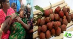 The mystery of a serious illness that killed more than 100 children a year in northern India was finally resolved! According to the US and Indian scientists, the mystery behind the outbreak was caused by eating lychees on an empty … Read More