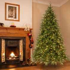 Martha Stewart Living™ 7.5 ft. Pre-Lit Royal Sarah Spruce ...