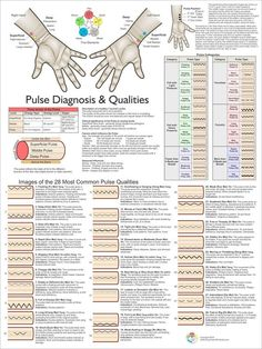 Pulse diagnosis categories and qualities with images. acupuncture Pulse Diagnosis Acupuncture Poster X Ayurveda, Circadian Rhythm Sleep Disorder, Eastern Medicine, Acupressure Therapy, Giving Up Smoking, Medical Technology, Technology News, Technology Articles, Traditional Chinese Medicine