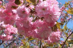 Pretty pink for Pink Ribbon!    www.pinkribbonfundraiser.com.au  www.pinkribbonday.com.au