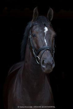 Paardenfotografie   Siska Kroondijk