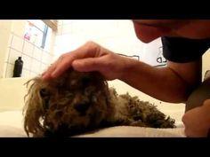 Perro abandonado Obtiene el rescate más bello - El final es hermoso - YouTube