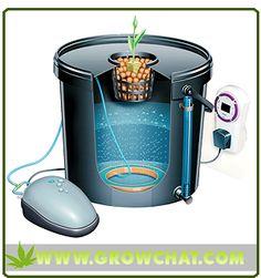 Understanding the use of Bubbleponics for Indoor Marijuana Growing http://www.growchat.com/understanding-the-use-of-bubbleponics-for-indoor-marijuana-growing