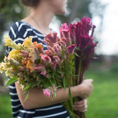 This mix features massive sized flower heads in pale lemon, apricot, cream, cranberry and soft orange and will churn out buckets of velvety flower heads for the better part of summer. August Flowers, Fall Flowers, Cut Flowers, Cut Flower Garden, Flower Farm, Flower Gardening, Diy Flower, Celosia Flower, Flower Bouquets