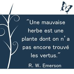 """Une mauvaise herbe est une plante dont on n'a pas encore trouvé les vertus."" R. W. Emerson. [Citations et bonheur] Blabla, Say Say Say, Motivational Quotes, Inspirational Quotes, Wit And Wisdom, Quote Citation, I Am Grateful, Life Is Hard, Sweet Words"