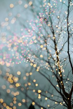 Winter Photography - Holiday Fairy Lights in Trees, Festive Winter Scene, Fine Art Landscape Photograph, Large Wall Art